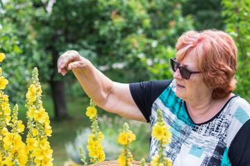 Active senior woman harvesting verbascum flower for alternative herbal medicine