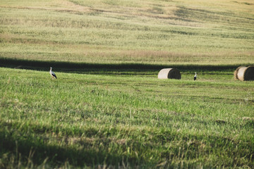 two storks, two haystacks
