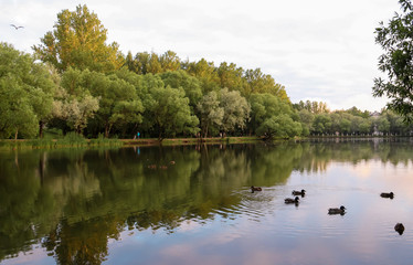 Yaroslavl. Warm evening in Neftyanik Park. Park refinery. Reflection of colorful sunset in the lake. Peace and quiet surrounded by green trees