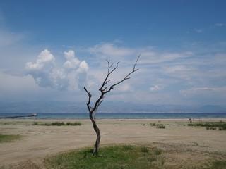 Einsamer Baum am Strand. Korfu, Griechenland