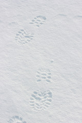 Foot steps on snow ground.