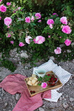 romantic picnic in rose garden