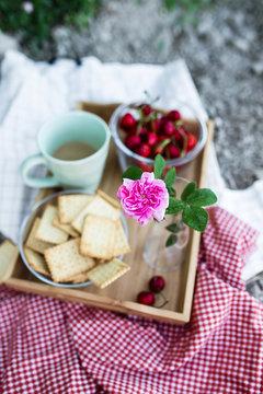 romantic picnic in rose garden focus on a rose