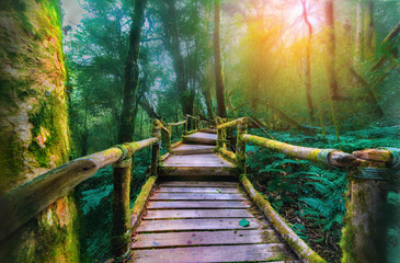 Green moss and wooden bridge at Angka nature trail in Doi Inthanon national park, Chaingmai,Thailand.
