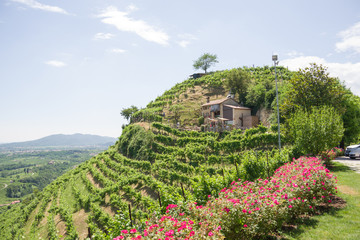 Treviso, Italy, 06/23/2019, View of the  Conegliano area famous for the production of prosecco wine, and the Col Vetoraz hill. Here the cultivation is 100% vineyard. Wall mural
