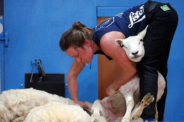 A sheep shearer participates in the blade category of the World Sheep Shearing and Woolhandling Championships in Le Dorat