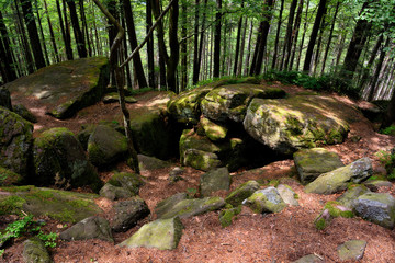 Druids cave. Dolmen in a forest in the Vosges with the largest cover plate in Europe.