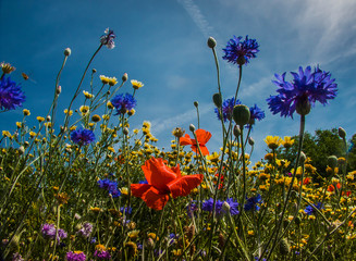 Blumenbeet im Sommer mit vielen bunten Blumen