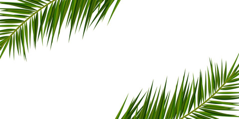Wall Mural - Summer Tropical palm leaves. Exotic palms tree. Floral Background.