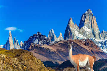Picturesque guanaco graze on the hill Fotomurales