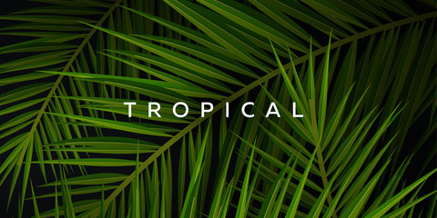 Wall Mural - Tropical palm leaves. Exotic palms tree. Dark Floral Backgrounds.