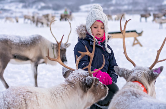 Little girl feeding reindeers in winter