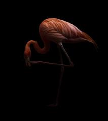 Foto op Canvas Flamingo american flamingo bird in dark backhround