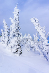 Fototapete - Winter Landscape in the High Alpine with Snow Covered Trees on the Hills surrounding Sun Peaks Village in the Mountains of the Shuswap Highlands of British Columbia, Canada