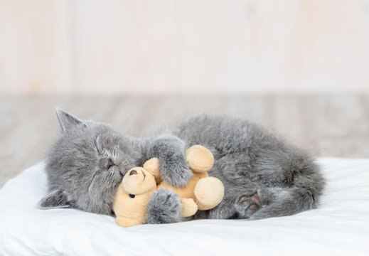 Baby kitten sleeping with toy bear on the bed at home