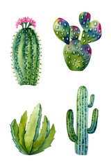 Set of watercolor cactus. Colorful illustration isolated on white. Hand painted succulents perfect for card making, wallpaper, fabric textile, interior design