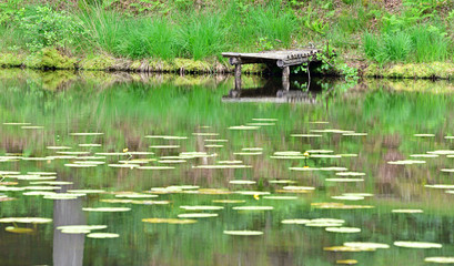 A wooden dock at a pond with water lilies in a quiet atmospähre.