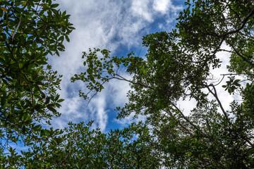 mangroven von Bintan