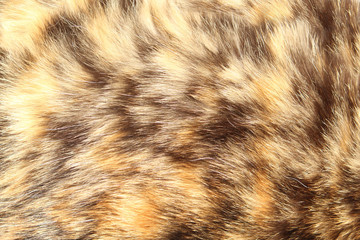 brown domestic cat fur with spots close-up, animal fur texture