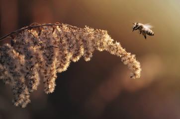 Fliegende Biene