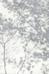 Wall Mural - Shadow Of Leaves Reflected On The White Wall