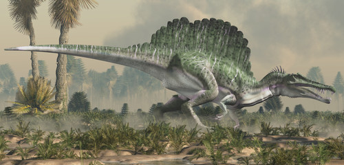 A spinosaurus in a wet lowland.  Spinosaurus was semi-aquatic dinosaur from the Cretaceous period.  It was one of the largest carnivorous dinos ever.  3D Rendering Wall mural