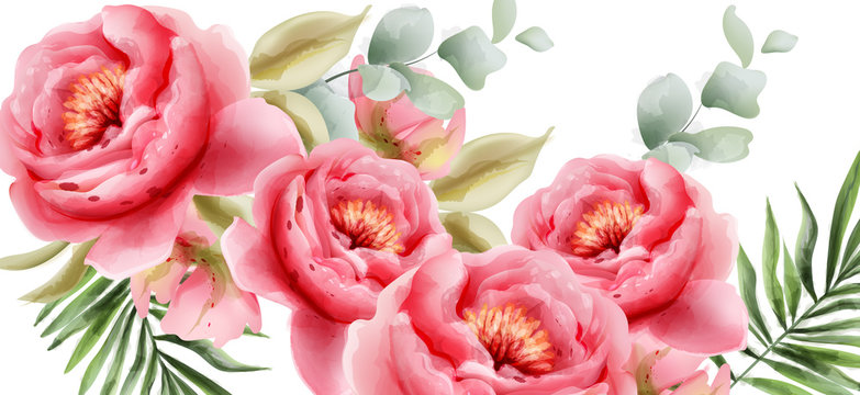 Pink peonies vector watercolor. Summer exotic floral backgrounds