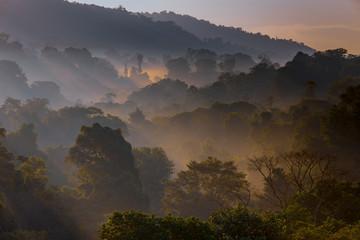 Misty Rainforest at Dawn