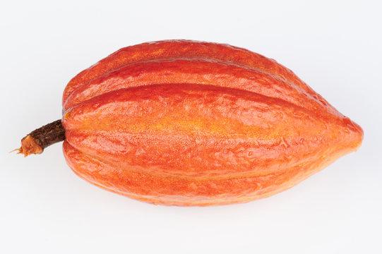 Orange color cacao pod