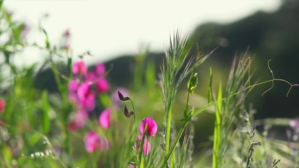 Fotoväggar - Spring nature background. Beautiful landscape. Park with green grass and blooming wildflowers. Slow motion 4K UHD video footage. 3840X2160