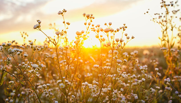 The beautiful field on the sunset and different wildflowers in front of it