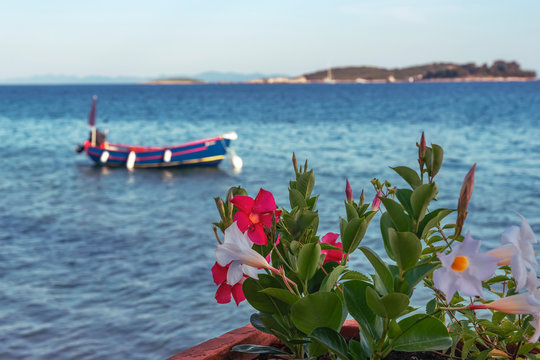 Decorative Mandevilla plant with white and red flowers against the background of the sea with boat and islands