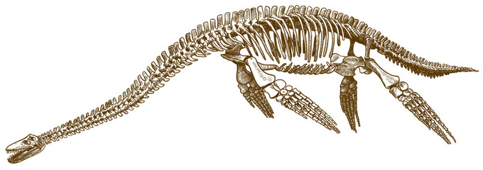 engraving illustration of plesiosaurus skeleton