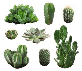 Wall Murals Cactus Beautiful cactus on white background