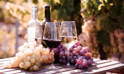 glasses of red and white wine and ripe grapes on table in vineyard Wall mural