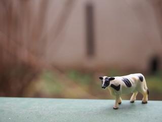 正面から見たミニチュアの牛