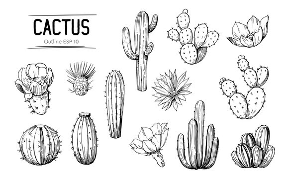 Set of cacti with flowers. Hand drawn illustration converted to vector