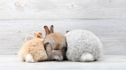 Lovely bunny easter rabbits on wooden background. beautiful lovely pets.