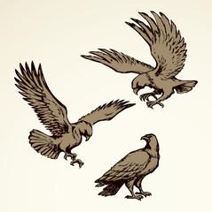 Eagle. Vector drawing