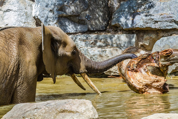 Zoo de la Flèche - Elephant