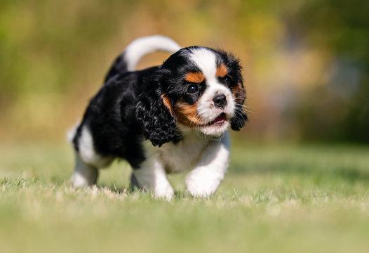 Beautiful happy dog breeds