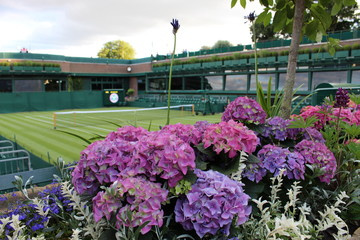court de tennis et hortensias