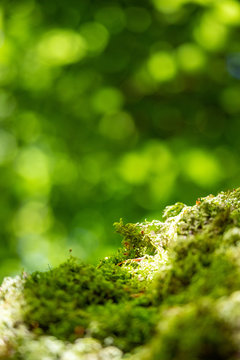 moss with bokeh green background