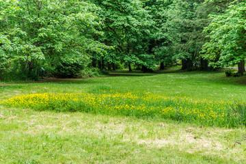 Staande foto Tuin Yellow Wildflowers Scene