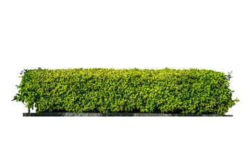 Green bush. Ornamental plant. The garden or the Park. Set of fences. Wall mural