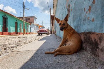 Homeless Street dog relaxing in a shade during a hot and sunny day. Taken in a small Cuban Town,...