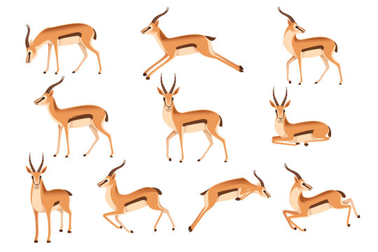 Set of african wild black-tailed gazelle with long horns cartoon animal design flat vector illustration on white background side view antelope