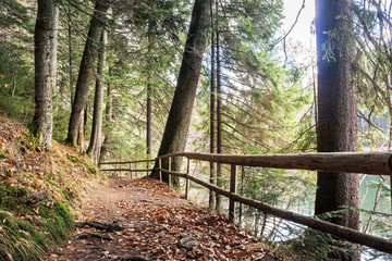 footpath through autumn forest. wooden fence along the path. lake synevyr behind the trees on the right. wine sunny weather. good time spent on open air concept