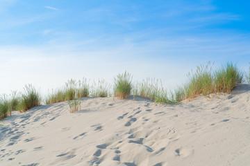 Wall Mural - Dune with beach grass.