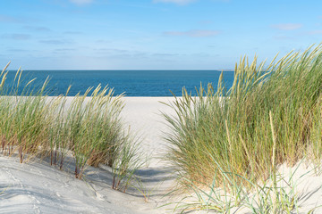 Foto auf Acrylglas Nordsee Dune with beach grass.
